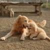 生後3か月で離れ離れになった犬の親子は再会すると気が付くのか❓❓