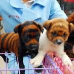 中国の虎犬