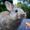 なんでもできる!賢く飼いやすい我家のウサギのウーちゃん
