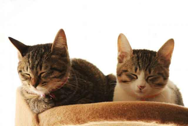 cat-sister
