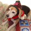 愛犬の病気を見抜いてくれたのは、セカンドオピニオン先の動物病院でした。