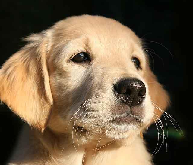 puppy640