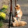 犬と猫の不思議な関係